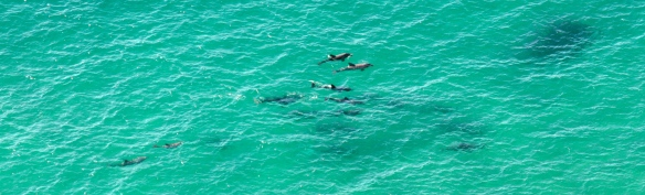 A pod of dolphins spotted during our hike
