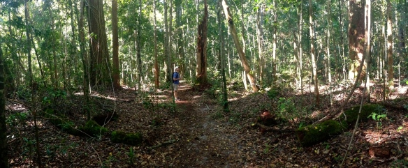 Hiking through the rainforest at Great Sandy National Park