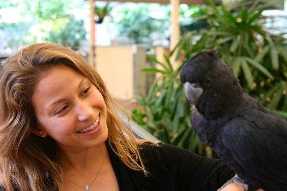 Hanging with Elvis the Black Cockatoo