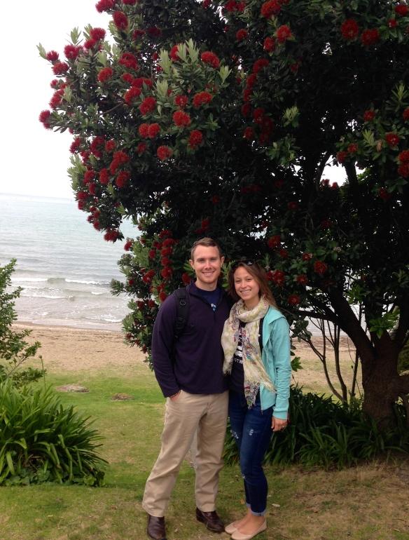 New Zealand's Christmas Tree or Pohutukawa tree.