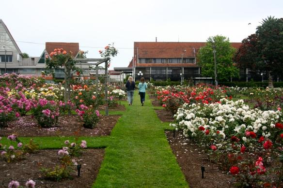 Auckland Rose Gardens.