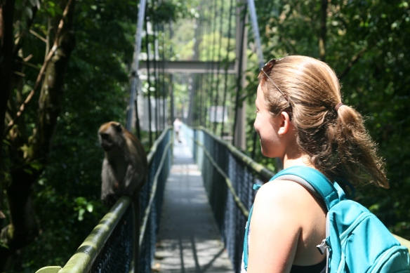 A Long-tailed Macaque guarding the Tree Top Walk bridge.