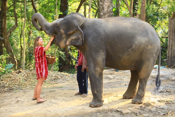 """Al with Ning, """"her"""" elephant for the day"""