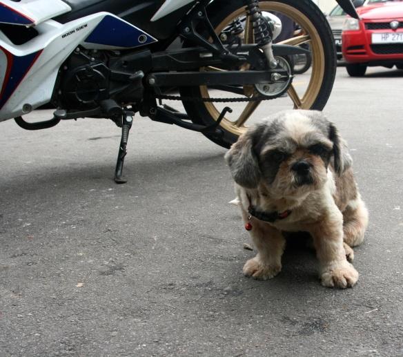 Beer shop guard dog.