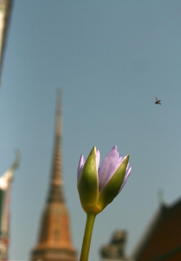 Lotus & fly, stupas & Buddhas