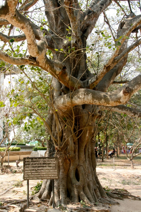 Tree upon which the Khmer Rouge mounted speakers playing music to mask the victim's screams at Choeung Ek.